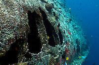 Fish swimming around the hull of a shipwreck near Faadhippolhu Atoll, Maldive Islands.