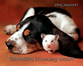Xavier, ANIMALS, REALISTISCHE TIERE, ANIMALES REALISTICOS, dogs, photos+++++,SPCHDOGS1047,#a#, EVERYDAY