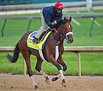 April 29, 2014: Wicked Strong, trained by Jimmy Jerkens, exercises in preparation for the Kentucky Derby at Churchill Downs in Louisville, KY.  Scott Serio/ESW/CSM