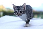 Chloé's cat Brioche par Pierre Teyssot on July the 23rd,  2020 in Pergine Valusgana, Italy