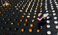 BNPS.co.uk (01202 558833)<br /> Pic: ZacharyCulpin/BNPS<br /> <br /> A geometric, colourful, autumn, harvest at Forde Abbey in Dorset.<br /> <br /> Pictured: Sam Kennard amongst the autumn harvest<br /> <br /> An autumn harvest of squashes and pumpkins was laid out in a perfect uniform grid for visitors at the Forde Abbey Monastery on the Dorset/Somerset border.<br /> <br /> Forde Abbey is a former Cistercian monastery dating back to the early 12th century