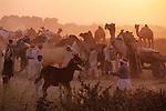 India, Rajasthan, Pushkar: Sunset over Pushkar camel festival | Indien, Rajasthan, Pushkar: Sonnenuntergang ueber dem Camel Festival