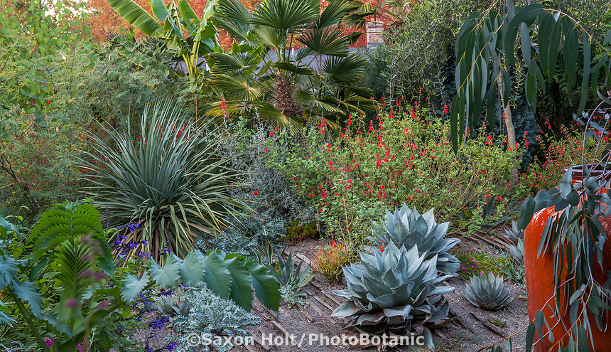 Foliage textures with Yucca, Agave, Salvia, Palm in Kuzma Garden. Photo MUST be credited as Design by Sean Hogan.