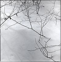 Branches poking through snow&#xA;<br />