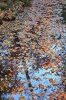 France, Allier (03), Villeneuve-sur-Allier, Arboretum de Balaine en automne, feuilles, reflets et eau d'un petit canal