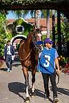 DEL MAR, CA  JULY 27: #3 Cistron enters the paddock before the Bing Crosby Stakes (Grade l) a Breeders' Cup Win and You're In Sprint Division, on July 27, 2019 at Del Mar Thoroughbred Club in Del Mar, CA. (Photo by Casey Phillips/Eclipse Sportswire/CSM)