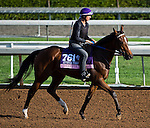 October 27, 2014:  Danette, trained by Keith Desormeaux, exercises in preparation for the 14 Hands Winery Breeders' Cup Juvenile Fillies at Santa Anita Race Course in Arcadia, California on October 27, 2014. Scott Serio/ESW/CSM