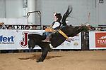 Bareback and Saddle Bronc