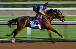 October 27, 2014:  Souper Colossal, trained by Eddie Plesa, exercises in preparation for the Sentient Jet Breeders' Cup Juvenile at Santa Anita Race Course in Arcadia, California on October 27, 2014. Scott Serio/ESW/CSM