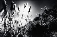 Sunlight through reeds<br />