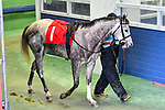 February 28, 2021: Savedbyanangel #1 , ridden by Joseph Talamo in the Downthedustyroad Breeders Stakes for trainer John Henry Prather, Jr. at Oaklawn Park in Hot Springs,  Arkansas.  Ted McClenning/Eclipse Sportswire/CSM
