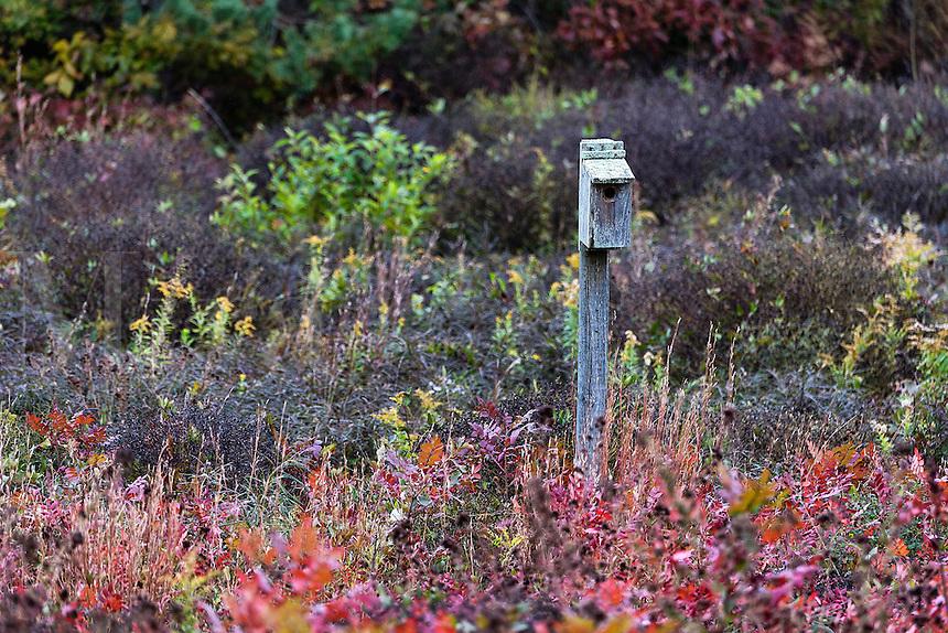 Birdhouse in autumn meadow.