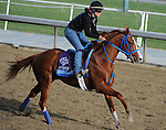 Brown Almighty, trained by Tim Ice, exercises in preparation for the upcoming Breeders Cup at Santa Anita Park on November 1, 2012.