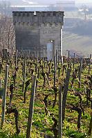 Vineyard. Chateau La Clotte Laclotte. Saint Emilion, Bordeaux, France
