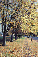 Tree lined street with leaves in fall color on ground.