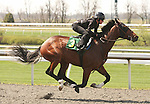 07 April 2011.  Hip #3 Tiznow - Lake Lady colt consigned by SGV Thoroughbreds, agent for W.D. North Thoroughbreds LLC.