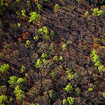 Spring growth in forest near Skyline Drive west of Charlottesville Virginia helicopter aerial