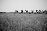 peloton stretching and breaking into echelons<br /> <br /> Tour de France 2013<br /> stage 13: Tours to Saint-Amand-Montrond, 173km