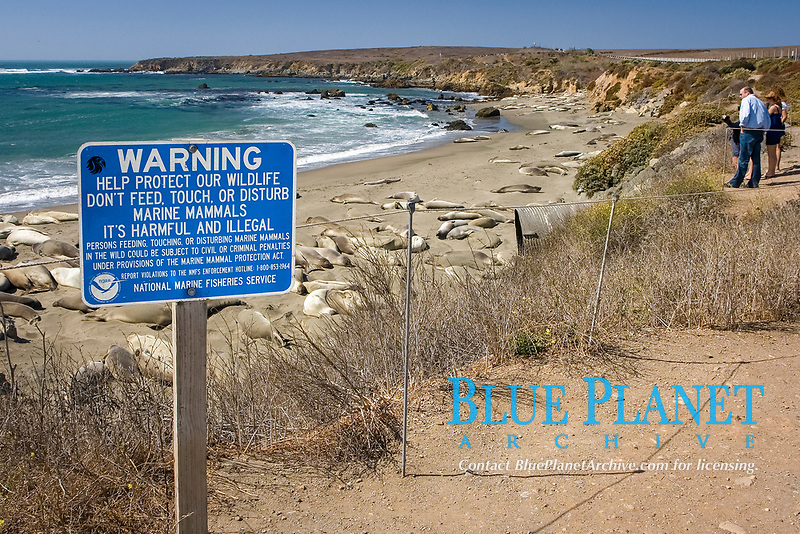 A sign informs sightseers to protect Elephant Seals (Mirounga angustirostris) at Point Piedras Blancas, part of the Monterey Bay National Marine Sanctuary. (do)