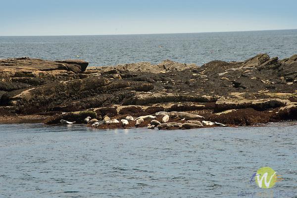Boothbay Harbor. Seal Rock.