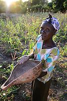 KENIA, ADS Anglican Development Services of Mount Kenya East, Stadt Embu, Dorf Gichunguri, Projekt Regenwasserauffang an einem Felsen und Speicherung in Tanks zur Nutzung in Duerreperioden, Agnes Irima, 44 Jahre, auf ihrem Hof, mit Kalabasse mit Sorghum Korn, im Maisfeld  - NUR FÜR REDAKTIONELLE NUTZUNG, kein PR !