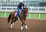 ARCADIA, CA - NOV 01: Beholder, owned by Spendthrift Farm LLC and trained by Richard E Mandella, exercises in preparation for the Breeders' Cup Longines Distaff at Santa Anita Park on November 1, 2016 in Arcadia, California. (Photo by Kazushi Ishida/Eclipse Sportswire/Breeders Cup)