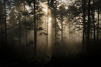 View from light ray in a forrest