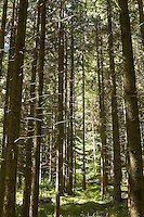 FOREST_LOCATION_90143