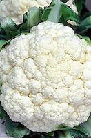Cauliflower 'Virgin' white head vegetable showing florets detail closeup