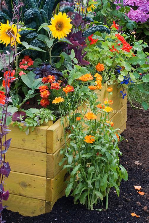 Sunflowers, calendula, veggies, marigolds, kale, raised bed and garden soil