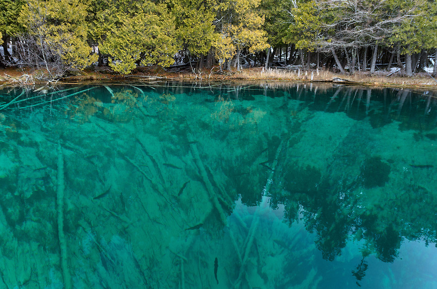 The beautiful emerald colored water at the Big Spring - Kitch-iti-kipi. The large lake trout are also fun to watch swim around which is can be seen in this scene. Manistique, MI