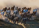 Charging horses create dust cloud by Jennifer Lu