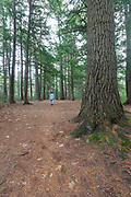 Man walking in softwood forest at the Dells Conervation Area in Littleton, New Hampshire.