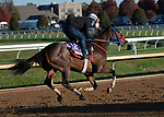 November 4, 2020: Come Dancing, trained by trainer Carlos Martin, exercises in preparation for the Breeders' Cup Filly & Mare Sprint at Keeneland Racetrack in Lexington, Kentucky on November 4, 2020. Jessica Morgan/Eclipse Sportswire/Breeders Cup.