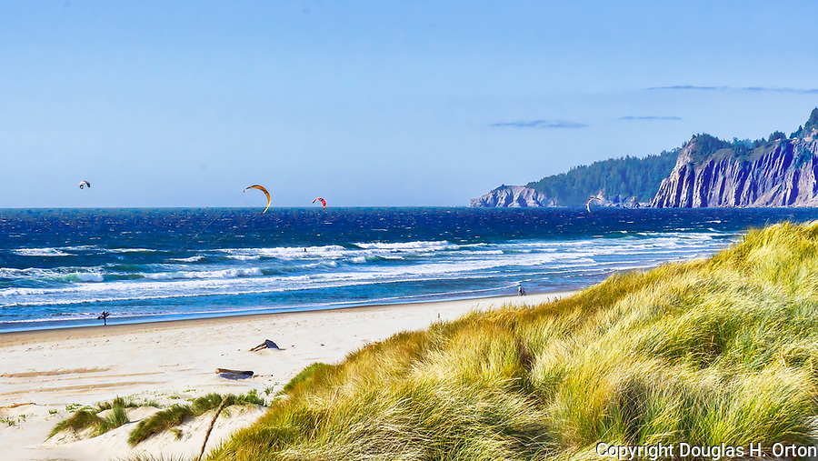 Windblown beach graass and kite surfers on ocean dunes, Nehalem Bay, Nehalem Bay State Park, Oregon.  Probably American Beach Grass but perhaps European, both invasive.  Between the Pacific Ocean and Nehalem Bay, looking north to Manzanita, Oregon