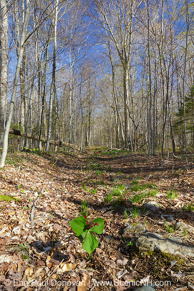Remnants of the Little River Railroad in Bethlehem, New Hampshire. This was a logging railroad owned by George Van Dyke and was in operation from 1893 -1900.