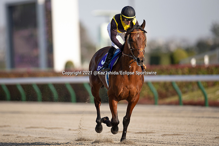 FUCHU,JAPAN-FEB 21: Cafe Pharoah,ridden by Christophe Lemaire,is post parading before the February Stakes at Tokyo Racecourse on February 21,2021 in Fuchu,Tokyo,Japan. Kaz Ishida/Eclipse Sportswire/CSM