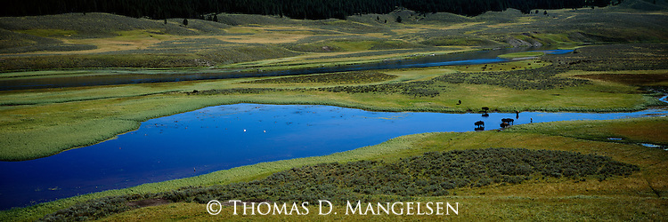 Bison stand in the Yellowstone River as it flows through Hayden Valley, in Yellowstone National Park, Wyoming.