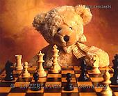 Xavier, CUTE ANIMALS, teddies, photos, SPCHTEDDIES34,#ac#