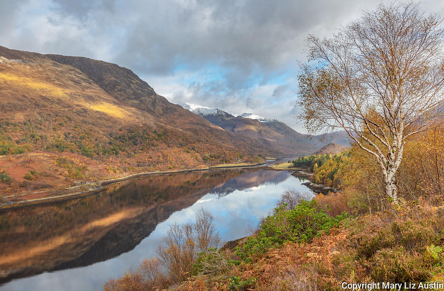 Glencoe, Scotland: Birch tree and fall underbrush along the Loch Leven with mountain reflections