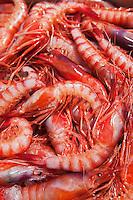 Europe/Italie/Ligurie/Imperia: Gamberoni - Grosses crevettes - au port de pêche d'Impéria