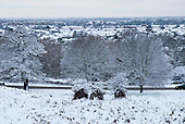Richmond Park, Surrey, England. Snow scene of park trees and roof tops. Wintry view of park with residential houses in the background stretching to the horizon.