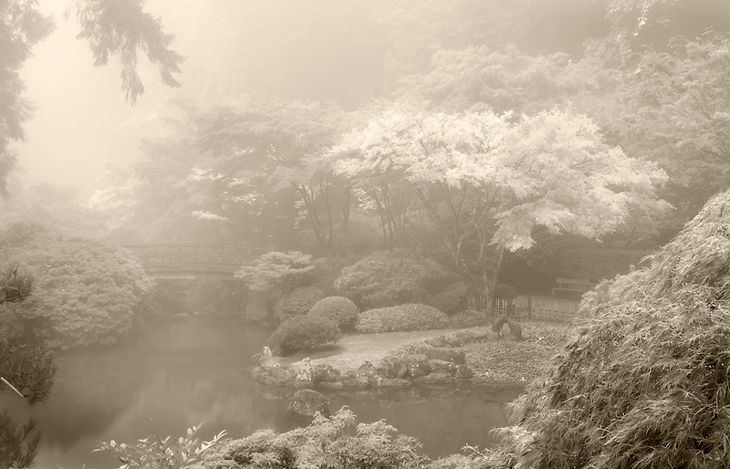 Portland Japanese Gardens in fog with fall color