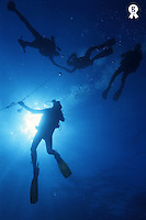 Scuba Divers at safety stop near surface, Cozumel Island, Mexico (Licence this image exclusively with Getty: http://www.gettyimages.com/detail/82406737 )