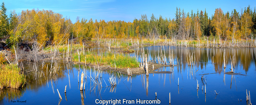 Flooded pond near Yellowknife in autumn