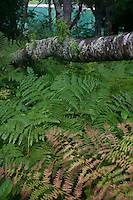Ferns and Trees at Diablo Lake, North Cascades National Park, Washington, US