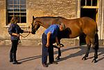 Brian Higham long serving Stud Groom at The Duke of Beaufort Badminton House estate. Morning inspection of the horses. Checkin g on horses hooves. 1995, 1990s.
