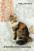 Isabella, REALISTIC ANIMALS, REALISTISCHE TIERE, ANIMALES REALISTICOS, paintings+++++,ITKE066166-L,#a#, EVERYDAY ,cats ,collage