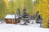 Snow covered boreal forest in Fairbanks, Alaska.