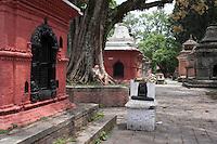 An old man rests under a tree at Goroknath Temple in Kathmandu, Nepal
